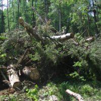 Имитация с «черными лесорубами» в Прибайкалье дала результаты — деньги потрачены