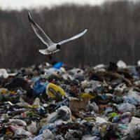 Трутнев предложил вознаграждение за сообщение об экологическом нарушении