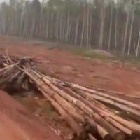 Проехать, чтобы потушить — не могут, а проехать чтобы вырубить лес — пожалуйста