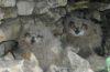 Мнение эколога: Решение о строительстве горнолыжной трассы на г.Отважная в Национальном парке «Самарская Лука» не ошибка, а спланированное преступление