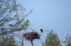 Императорский орел возвращается из Китая на Байкал