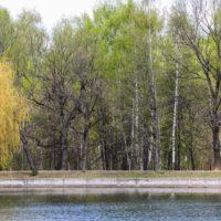 Дикие утки: Мосприрода подготовила виртуальную экскурсию по Терлецкому лесопарку