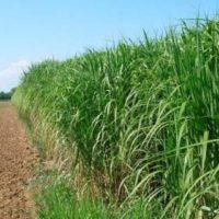 Будущность урожайности сельхоз культур за биоэнергией