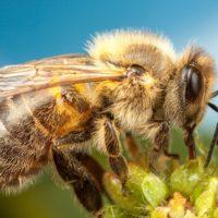 «Раздаются мрачные прогнозы об исчезновении к 2035 г. популяции пчел в мире в целом» — Интервью