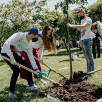 Более 26 млн деревьев высадили в рамках акции «Сад памяти» в России