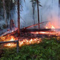 Борьба с пожаром в заповеднике «Денежкин Камень» все еще продолжается