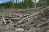 Спрос древесины у Китая и ведомственные барьеры — катастрофа для российского леса