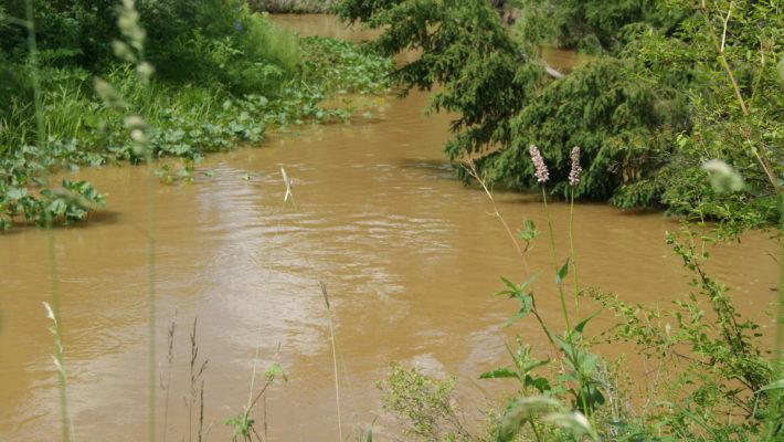 Из-за загрязнения реки Кувай в Красноярском крае проверяют деятельность золотодобытчиков