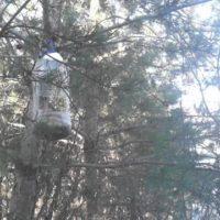 На птичий обед  в биостанцию Маринино прилетали полевые воробьи и синички