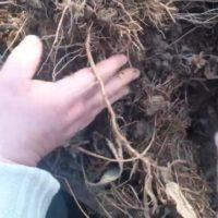 ЭкоГрад продолжит эксперимент по выращиванию богатого урожая