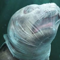 Видео кормления кита в Сиамском заливе получило объяснение биологов