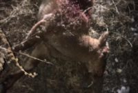 Незаконная охота в заповеднике Северной-Осетии пуще неволи…