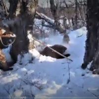 Охота – рациональное природопользование, или сфера бездумного браконьерства