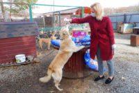 Ольга Тимофеева: «Прямые поручения Президента по животным – это общая победа законодателей и зоозащитников»